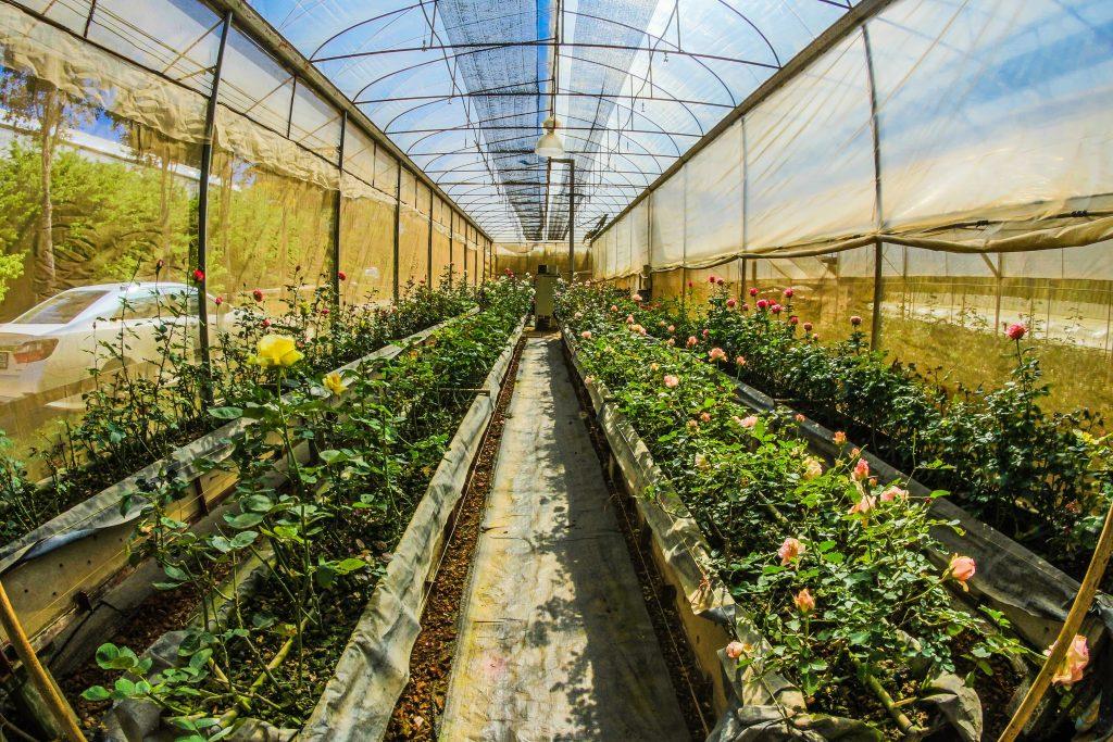 champ de plantation